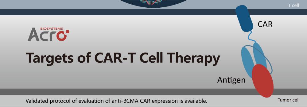 CAR-T targets