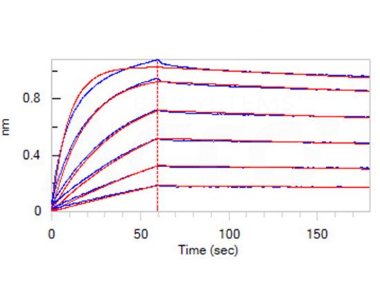 Good bioactivity validation of CD20-DDM/CHS