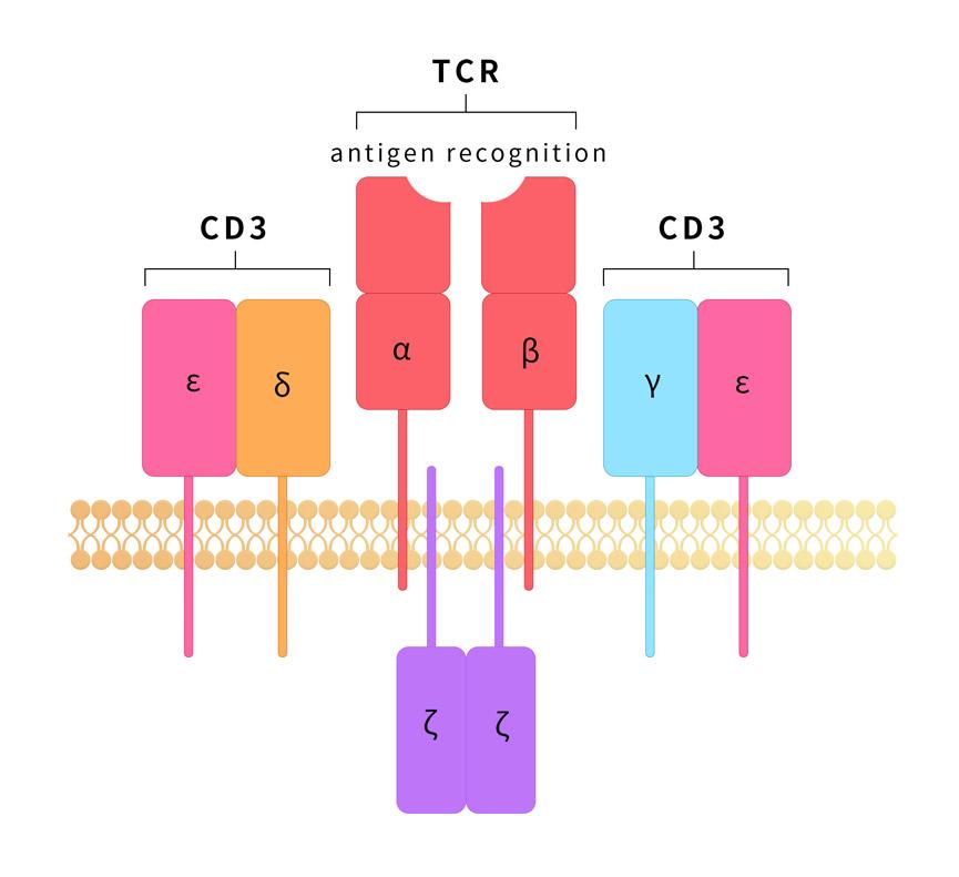 CD3Function