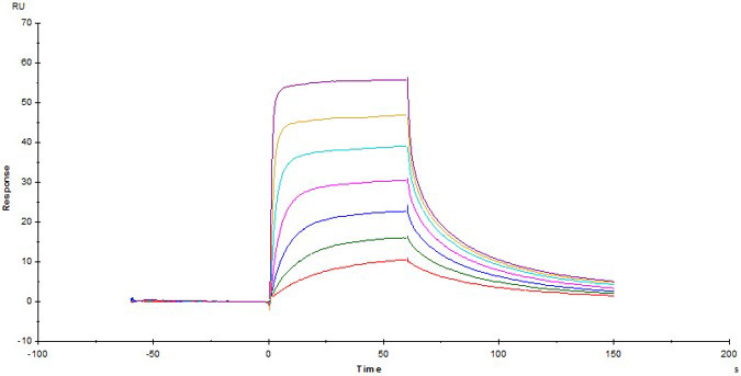 SPR分析への応用1