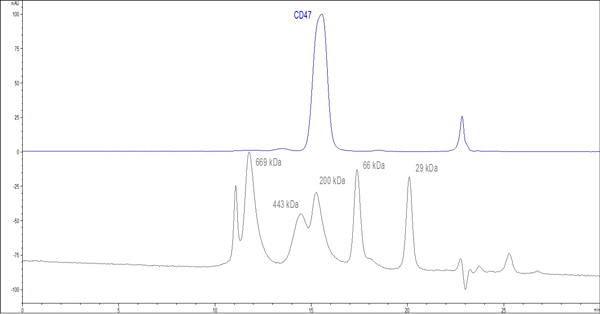 purity of CD47