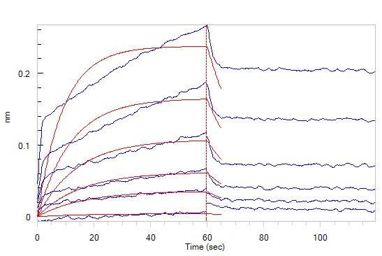 CD47とSIRPアルファの結合性(2)