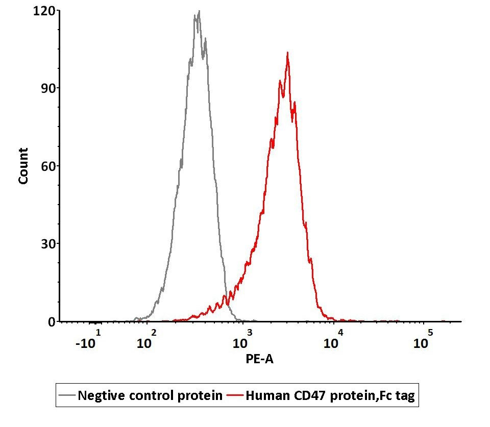 CD47とSIRPアルファ発現細胞の結合性