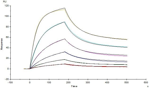 CD47と抗CD47抗体の結合性(2)
