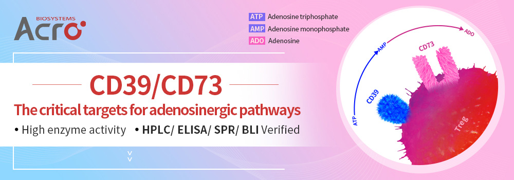 CD73: A novel target for immunotherapy