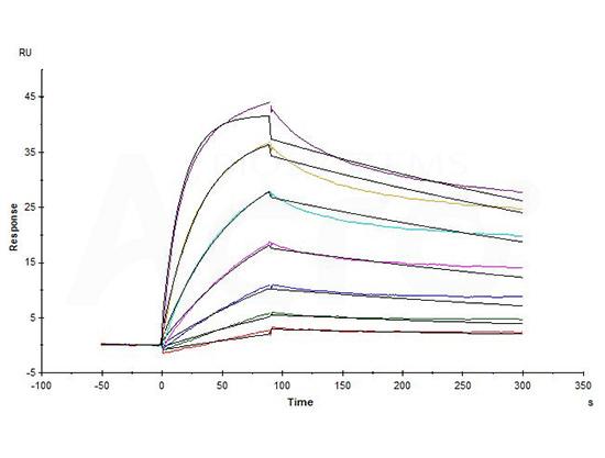 High affinity validation of CD20-DDM/CHSE