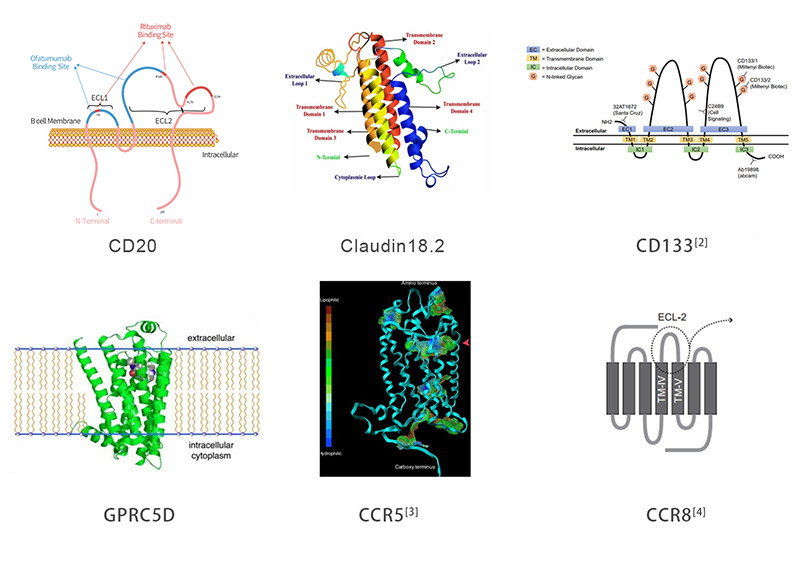 Multi-pass transmembrane target proteins