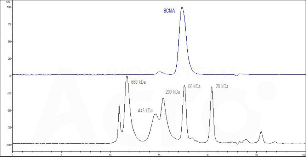 Human BCMA, Fc Tag (HPLC verified) (Cat. No. ) HPLC images