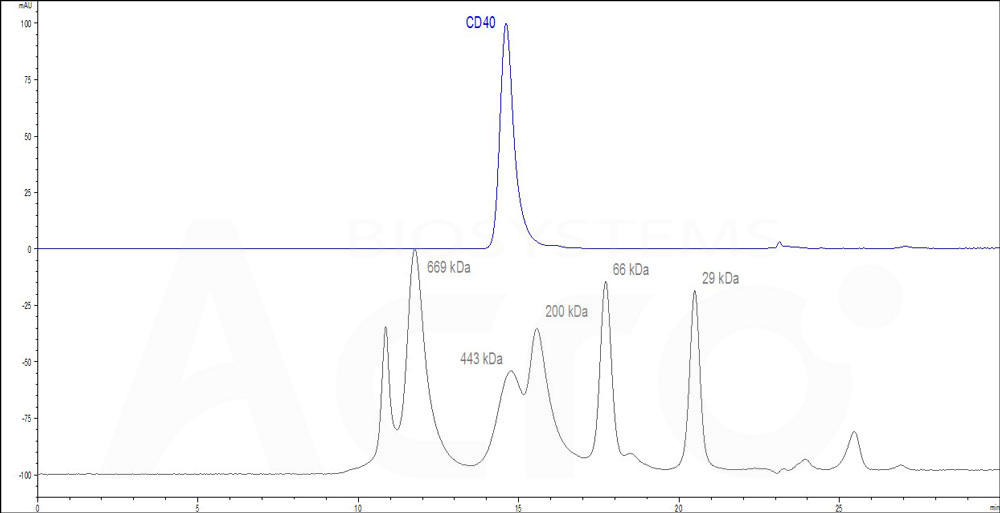 Human CD40, Fc Tag (Cat. No. ) HPLC images