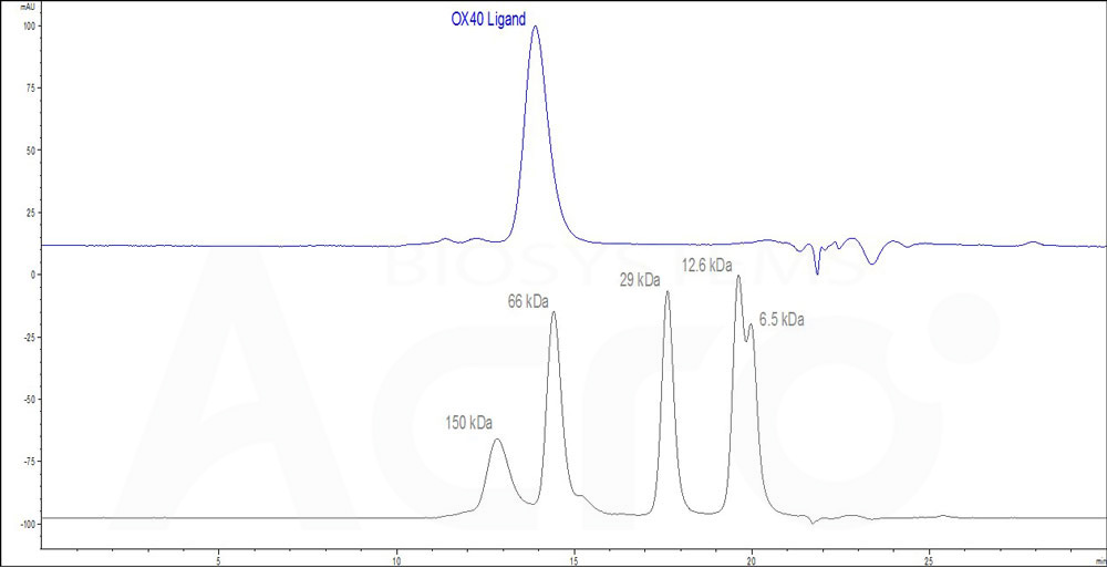 Human OX40 Ligand, His Tag (active trimer) (HPLC-verified) (Cat. No. ) HPLC images