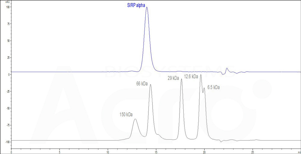 Human SIRP alpha (HPLC-verified), His Tag (Cat. No. ) HPLC images
