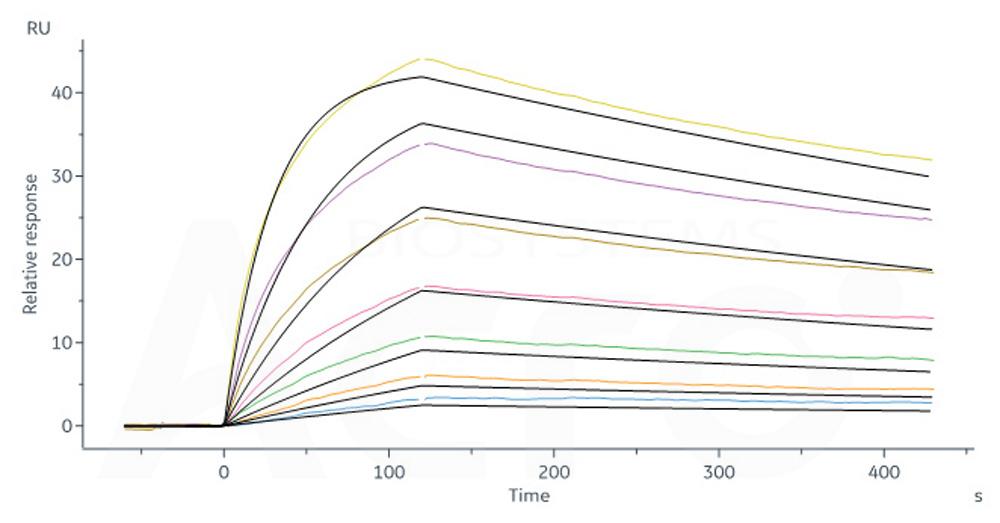 Bioactivity-SPR