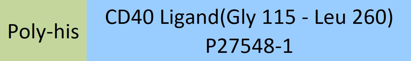 CD40 Ligand(Gly 115 - Leu 260) P27548